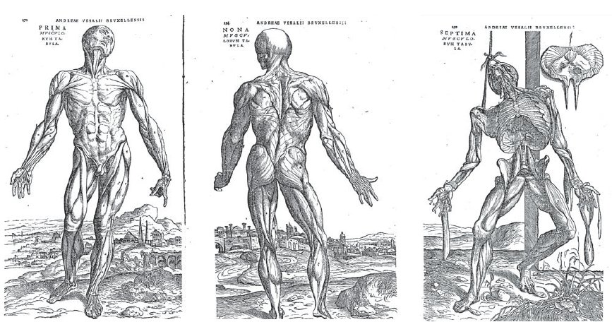 Fig.4 SF
