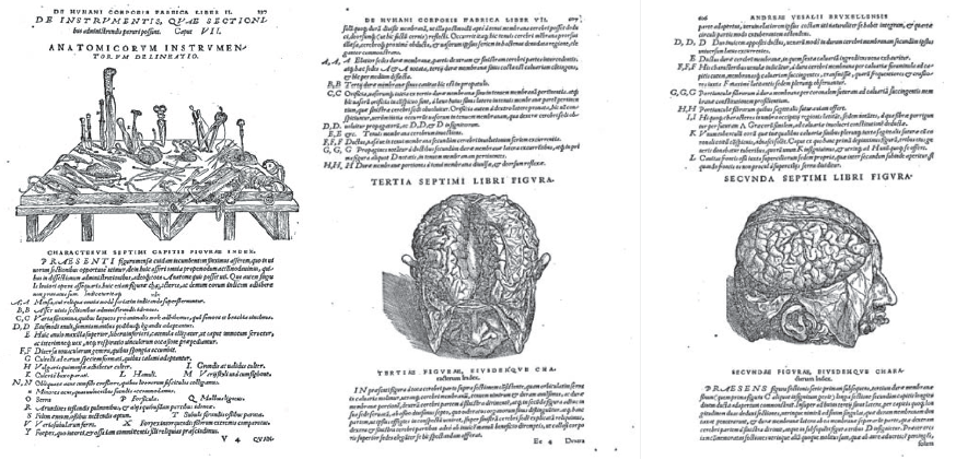Fig. 3 SF